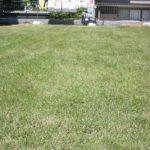 芝生を張ろう(7)