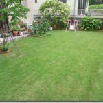 今年の芝生 2010